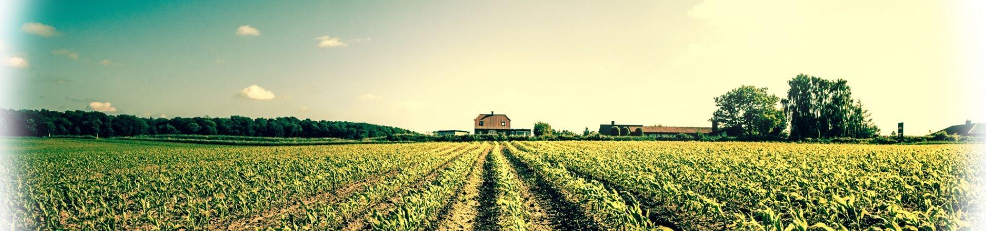 Farmland wider