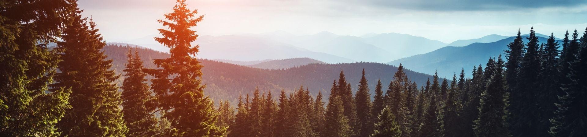 Mountain woodland slider