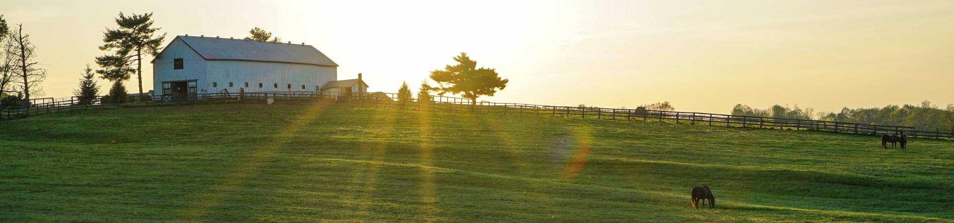 White-house-beside-grass-field-2042161