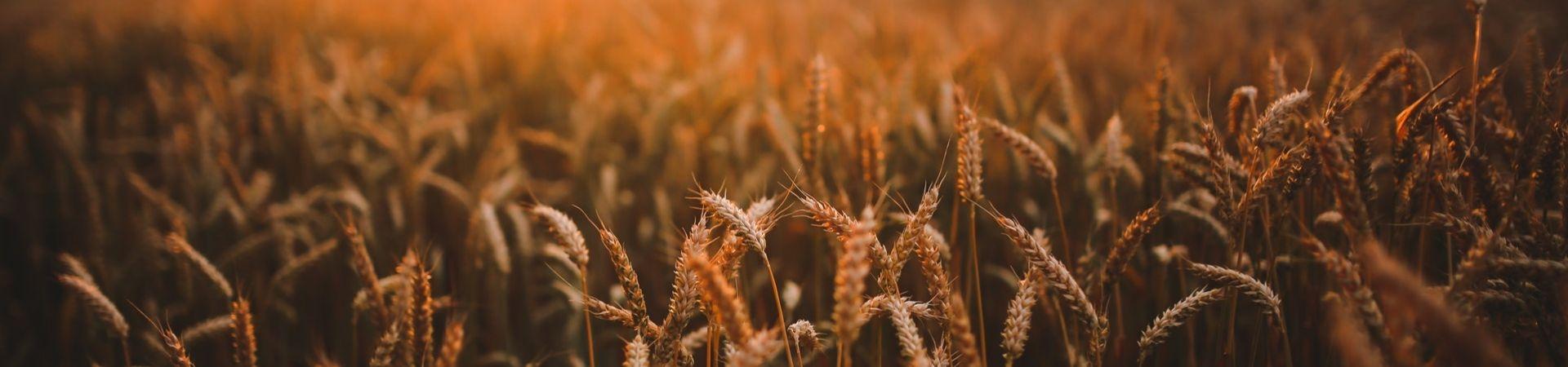 Food-sunset-love-field