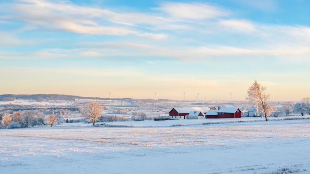 Winter blog