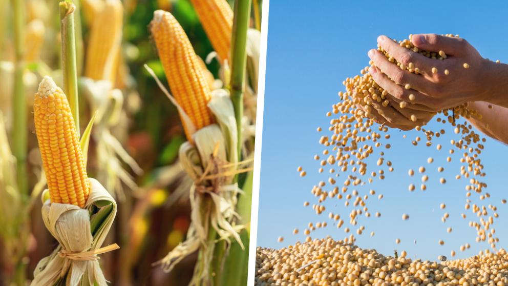 Grain markets header